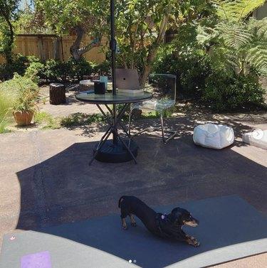 dog doing downward dog pose