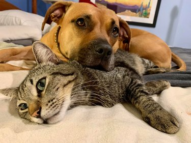 Cat and dog cuddling on bed