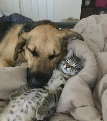 Kitten and dog cuddling on bed