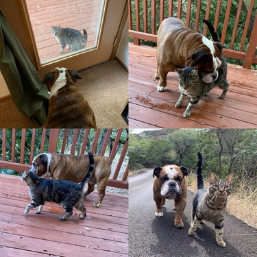 Cat and dog having adventures together