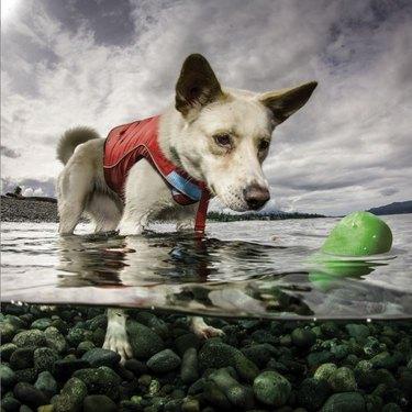 Dog with Kurgo Skipping Stones Dog Toy