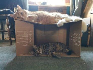 cats sleep on box