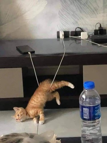 kitten tangled by phone charger