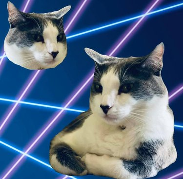 cats Photoshopped into a class portrait with lasers