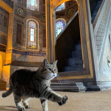 Cat strolling confidently through mosque.