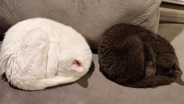 A white cat and a black cat sleeping side by side in identical bun positions