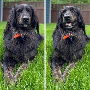 Happy-looking dog