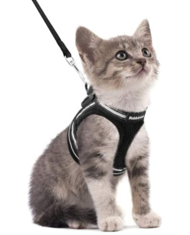 Rabbitgoo Adjustable Soft Kitten Vest