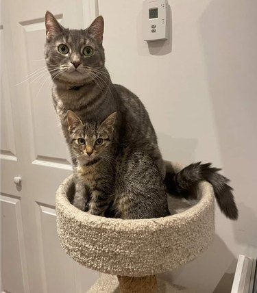 kitten sits next to mother cat