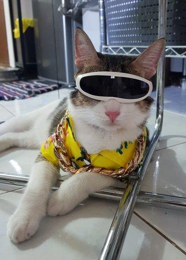 stylish cat rocking futuristic sunglasses