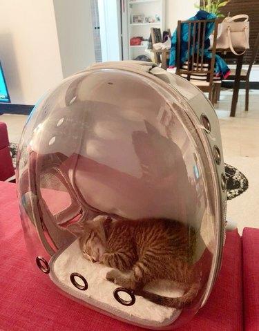 cat sleeping in bubble backpack