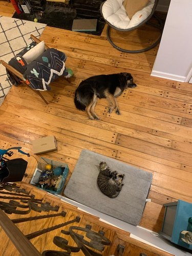 Dog sleeping on floor next to cat on large dog bed