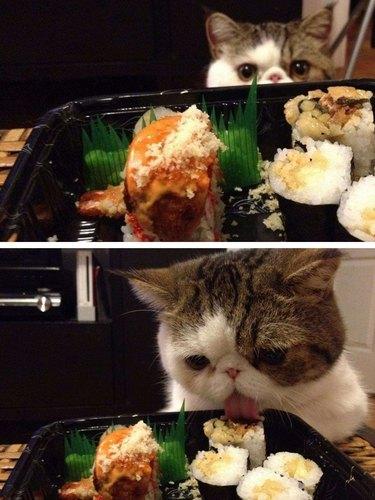 Cat licking sushi