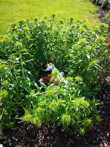 Cat laying on flowerbed