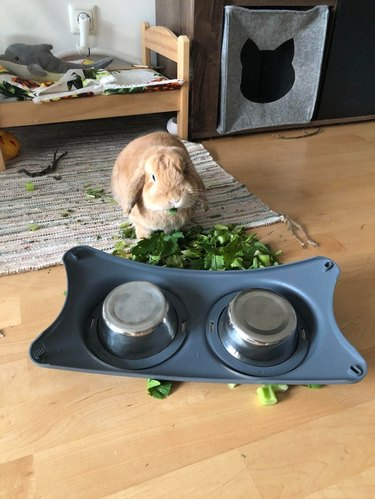 Rabbit next to upturned bowl of chopped greens