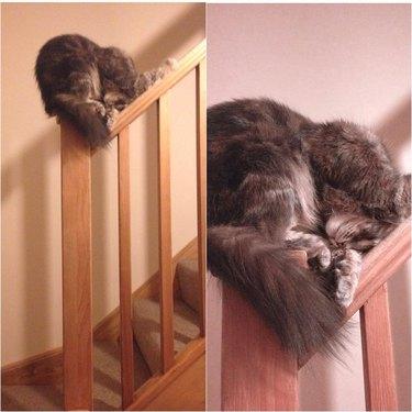 cat sleeping on stair railing