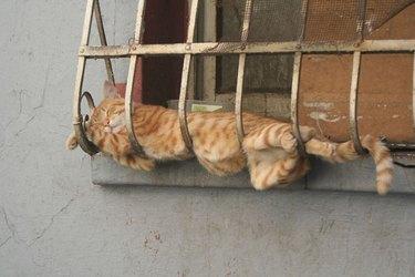 cat sleeps on window grate