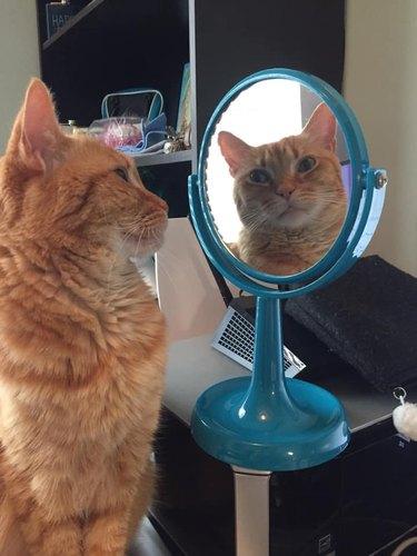 cat admires self in mirror