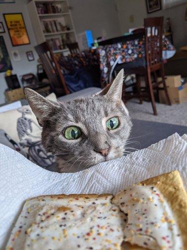 cat eyes human food