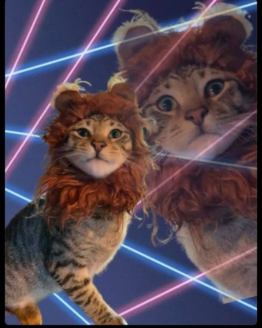 cat in class photo with lazers