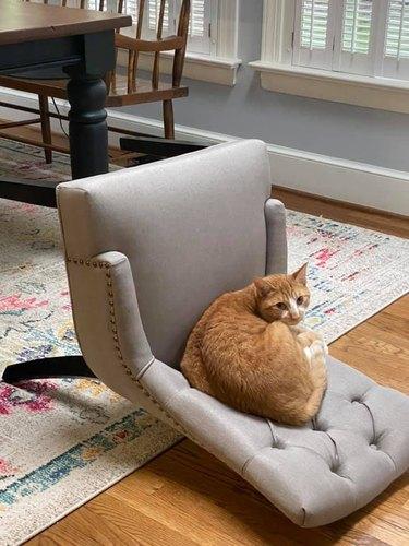 cat sleeps on knocked over chair