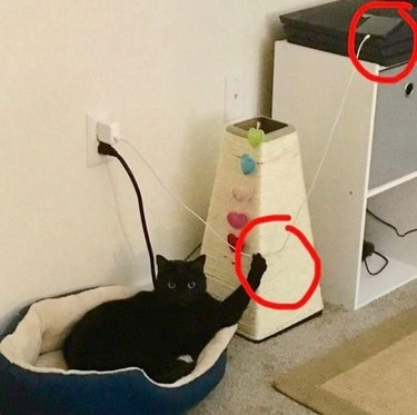 cat threatens to knock phone off shelf