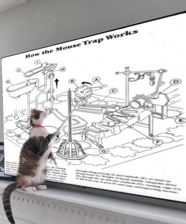 cat defends dissertation
