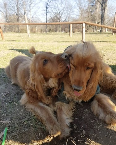 dog kissing other dog on the cheek