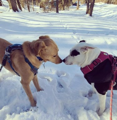 dogs touching noses