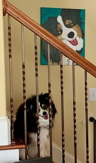Dog sitting on stairs underneath portrait of itself in the same position
