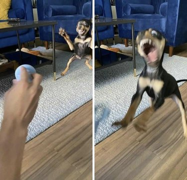 Blurry pictures of puppy jumping to catch a ball