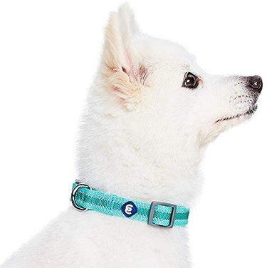 Blueberry Pet Essentials 20+ Colors Classic Dog Collars