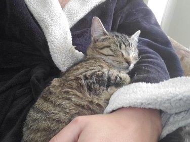 cat sleeping hard on person