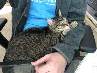 cat sleeps in human's lap
