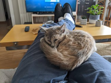 cat curled up on person's lap