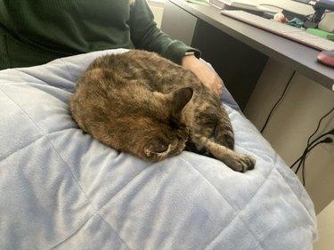 cat sleeping on woman's lap