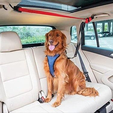 PetSafe Happy Ride Dog Zipline - Backseat Leash