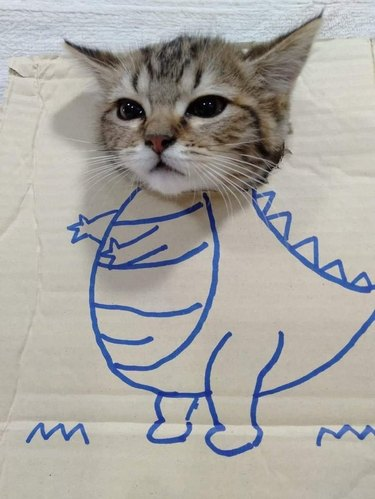Kitten sticking its head through hole in cardboard box with a drawing of a dinosaur's body on it