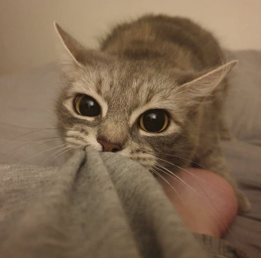 Cat pulling blanket away from human's foot