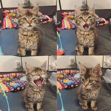 Kitten making funny faces