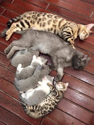cat family sleeping together