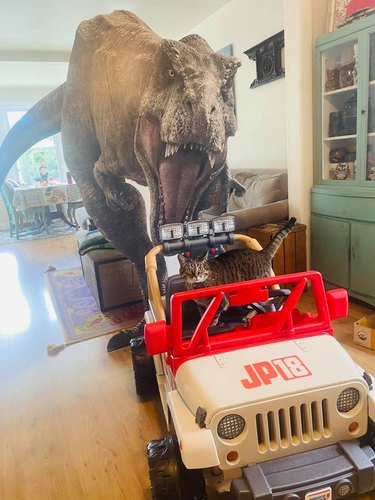 cat in jeep in front of cardboard t-rex