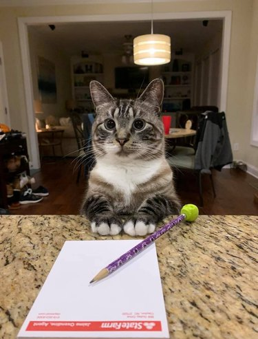 cat has shopping list for humans