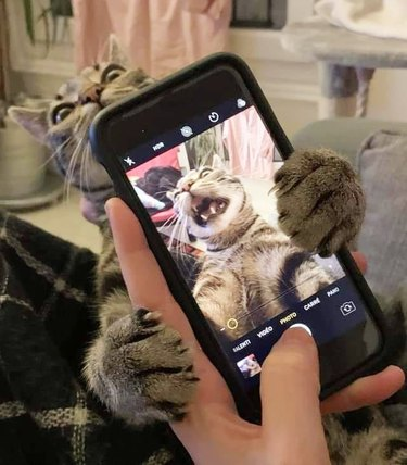cat tries to bite phone