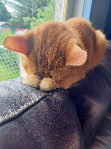 sleeping cat covers eyes