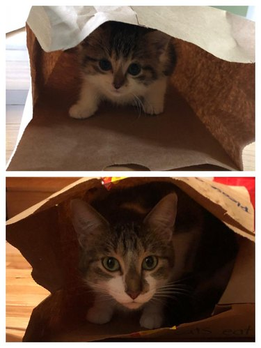 Photo of kitten in paper bag on top of photo of same cat in a paper bag as an adult