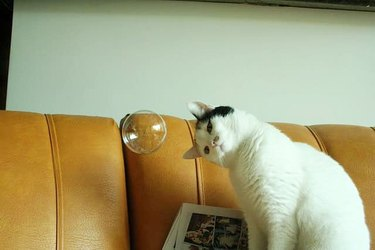 cat stares at floating bubble