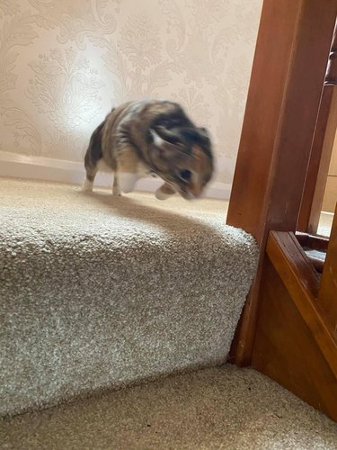 cat jumping off stairs