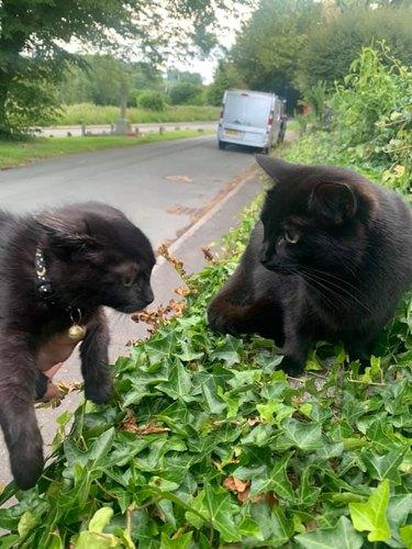 black cat nervous about meeting other black cat