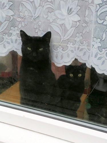 black cat and black cat mini me